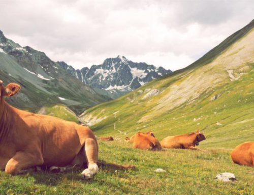 Aktivurlaub und Gesundheitskur in den Bayerischen Alpen