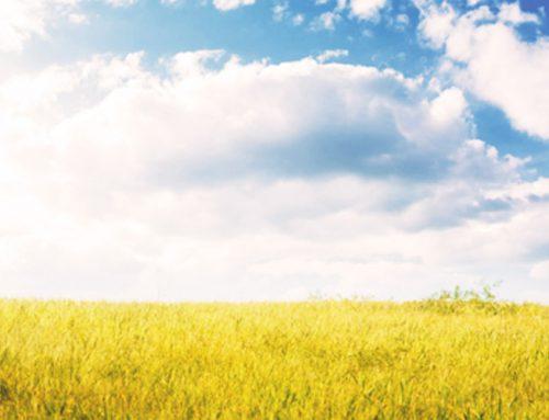 Tipps gegen Heuschnupfen – Soforthilfe bei Pollenallergie